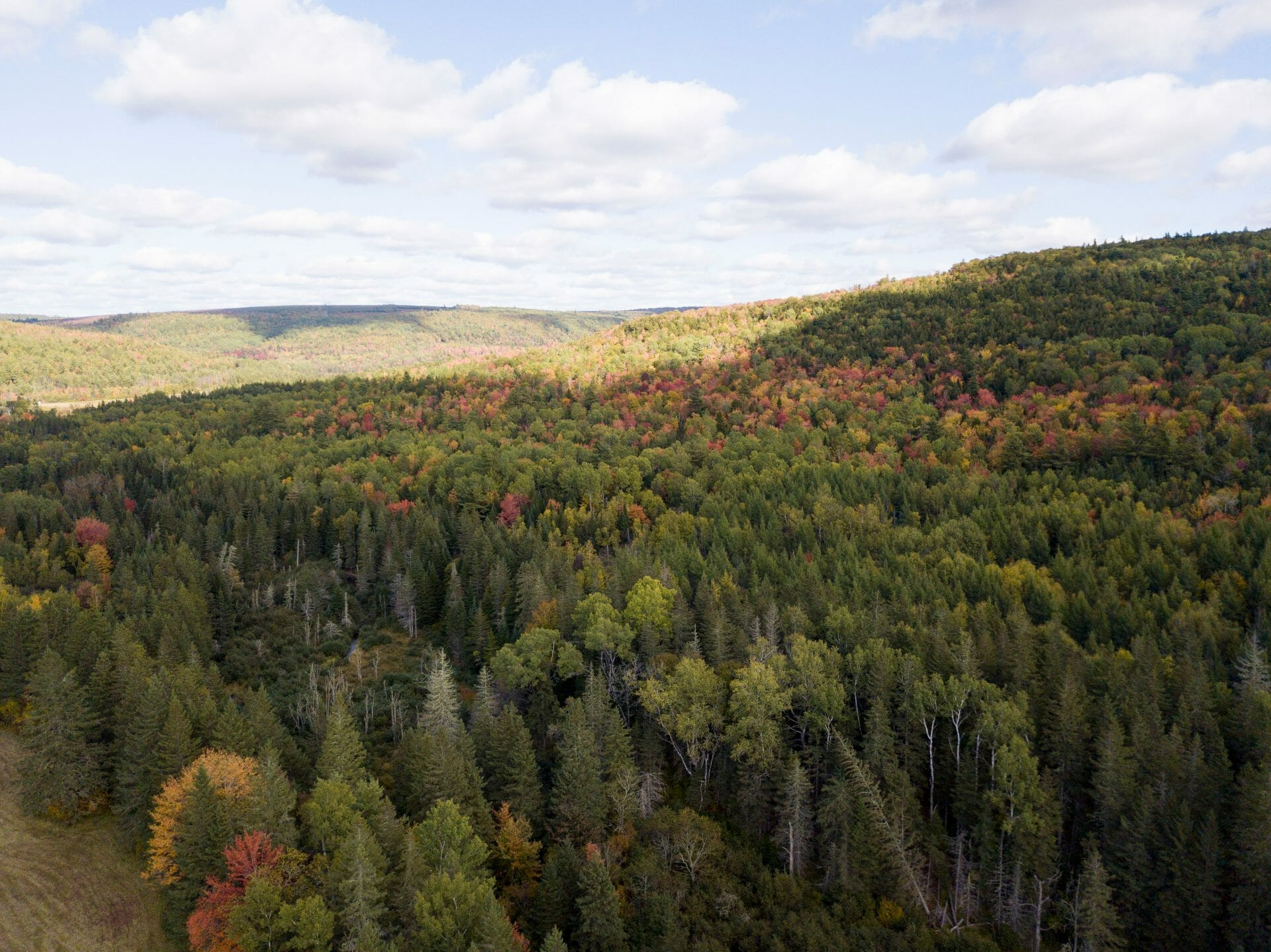 Whaelghinbran Forest in fall colours from above.
