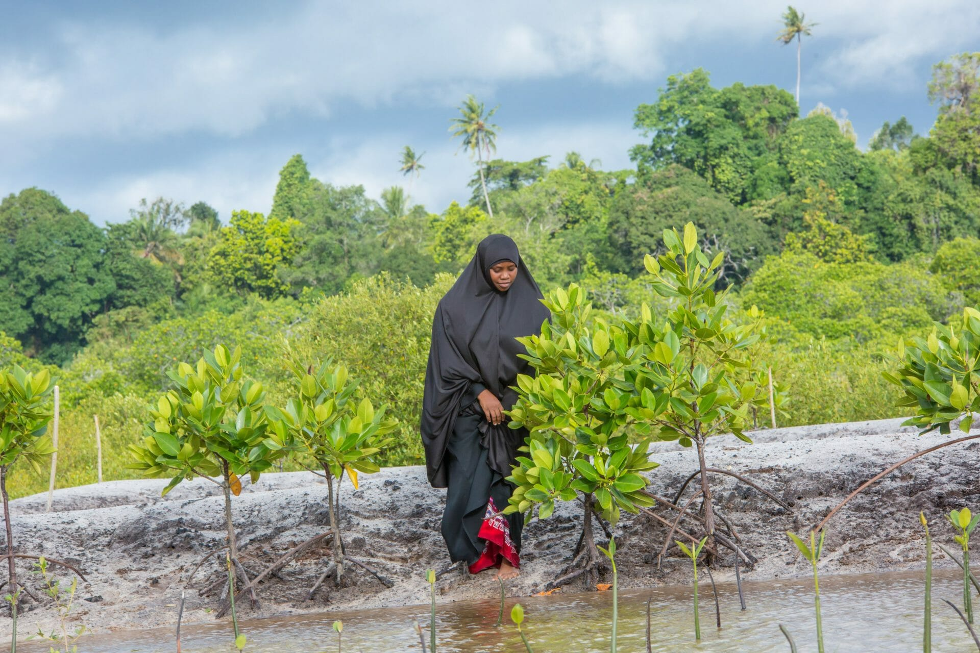 A woman tends to a young mangrove tree on the beach. The sky is stormy in the background.