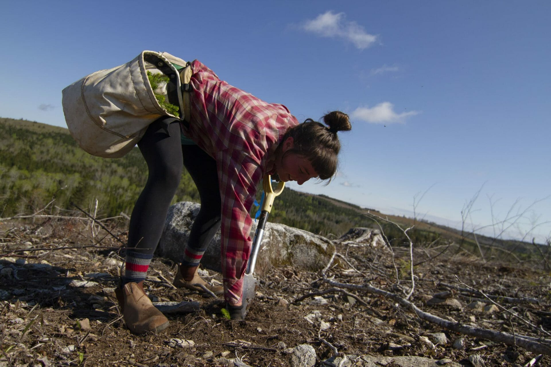 A woman wearing a pink plaid shirt bends over to plant a tree in a clearcut.