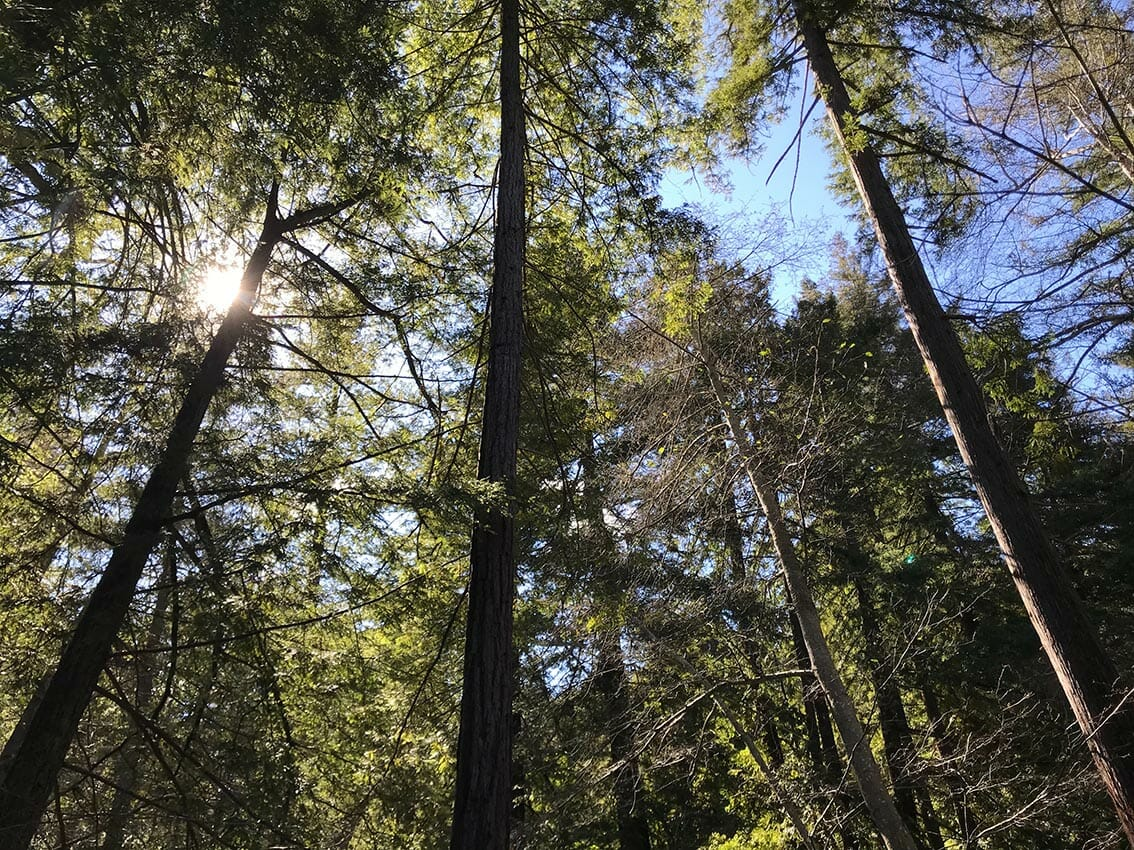 Green forest, sky and sun