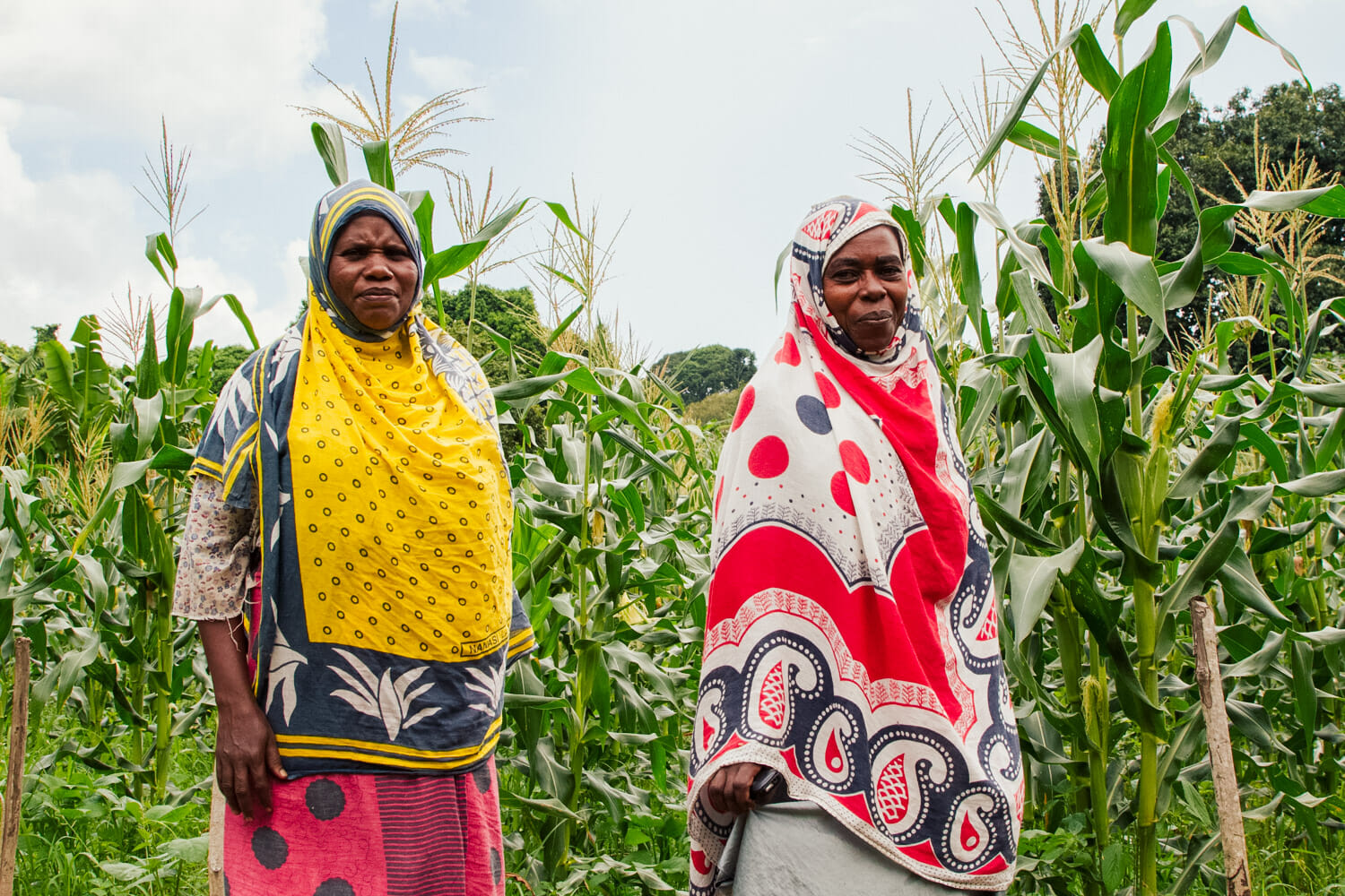 Two women farmers stand in their corn crop.