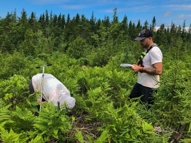 Community Forests International staff perform a forest regeneration survey.