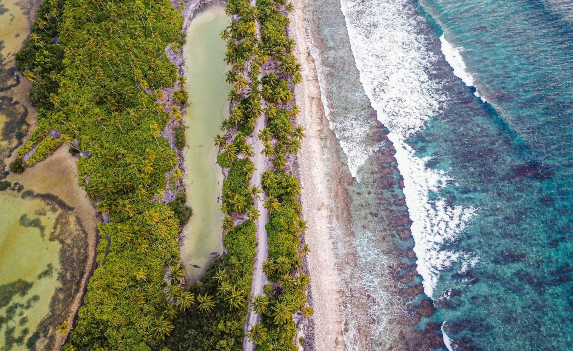 Sea and mangrove trees