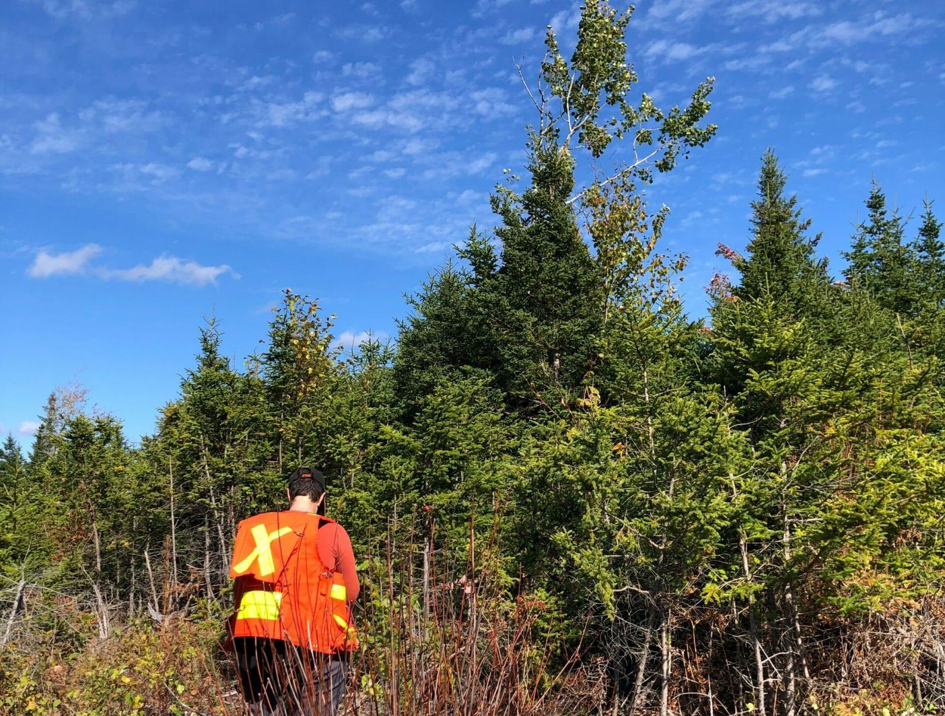 Acadian Forest Manager Megan surveys one of Community Forests' new forests