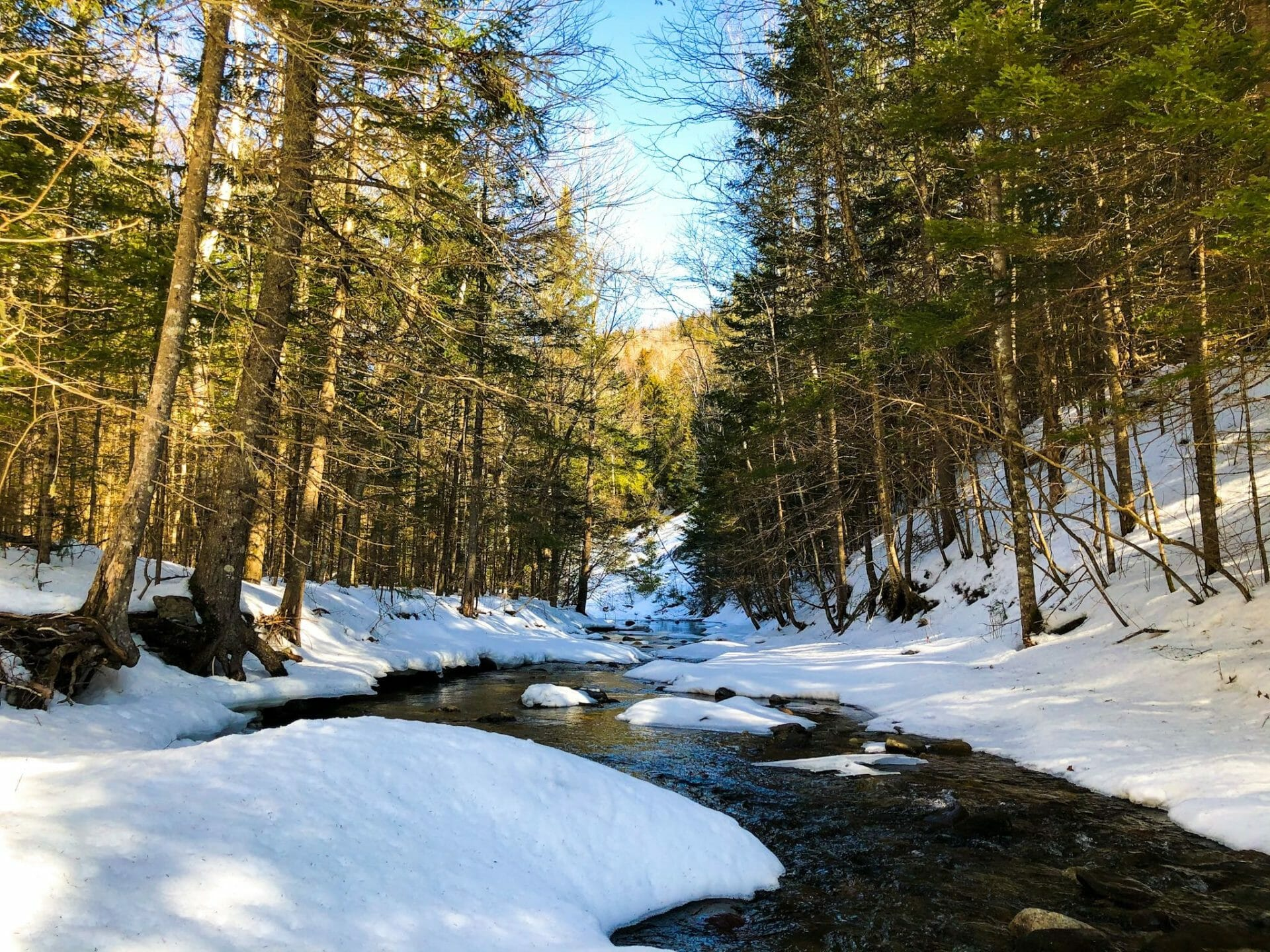 Snow covered river leading into forest of trees with blue sky above