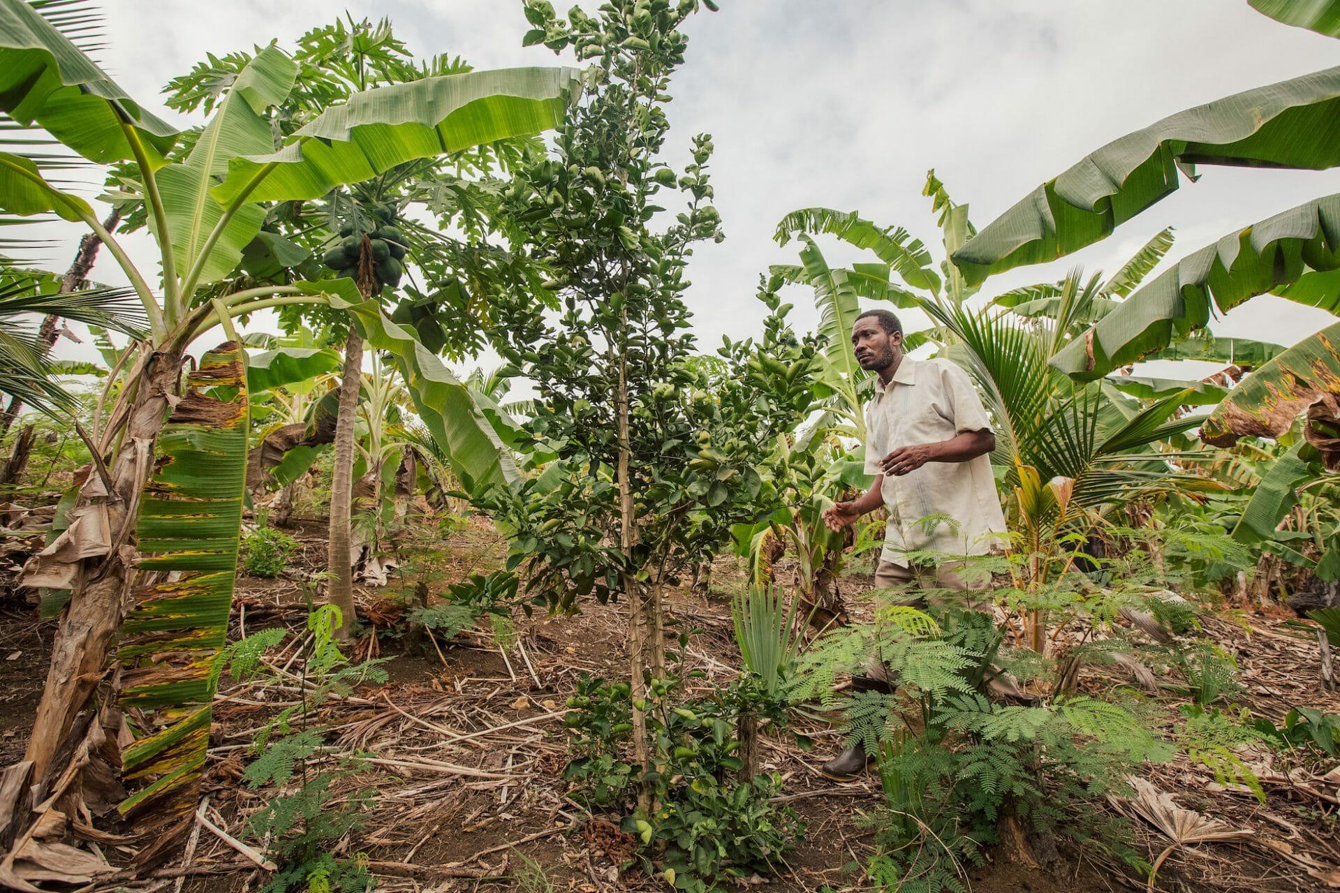 A man walks in an agroforest in Zanzibar.