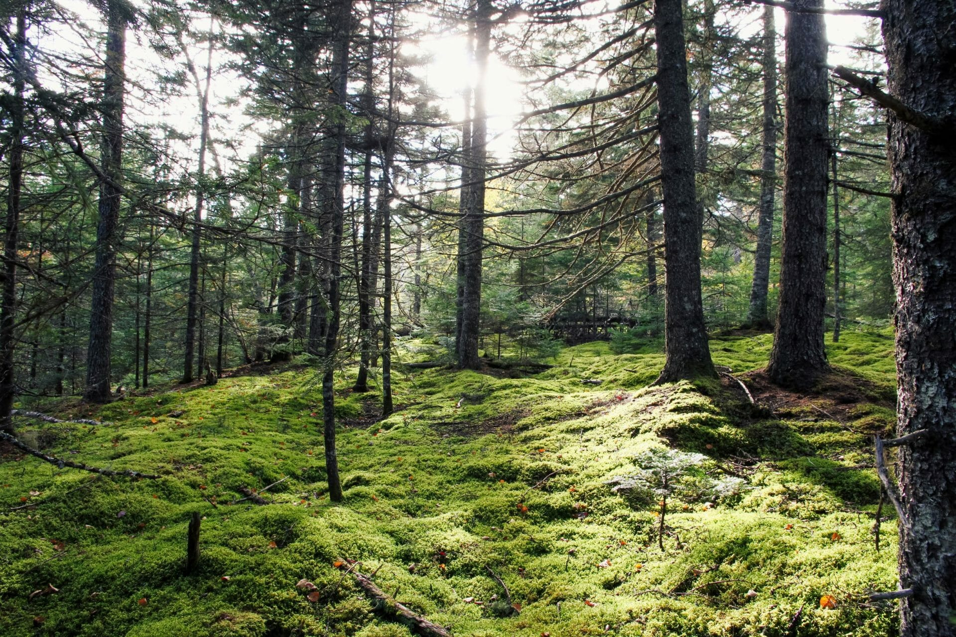 Mossy forest ground with trees and sunlight in background
