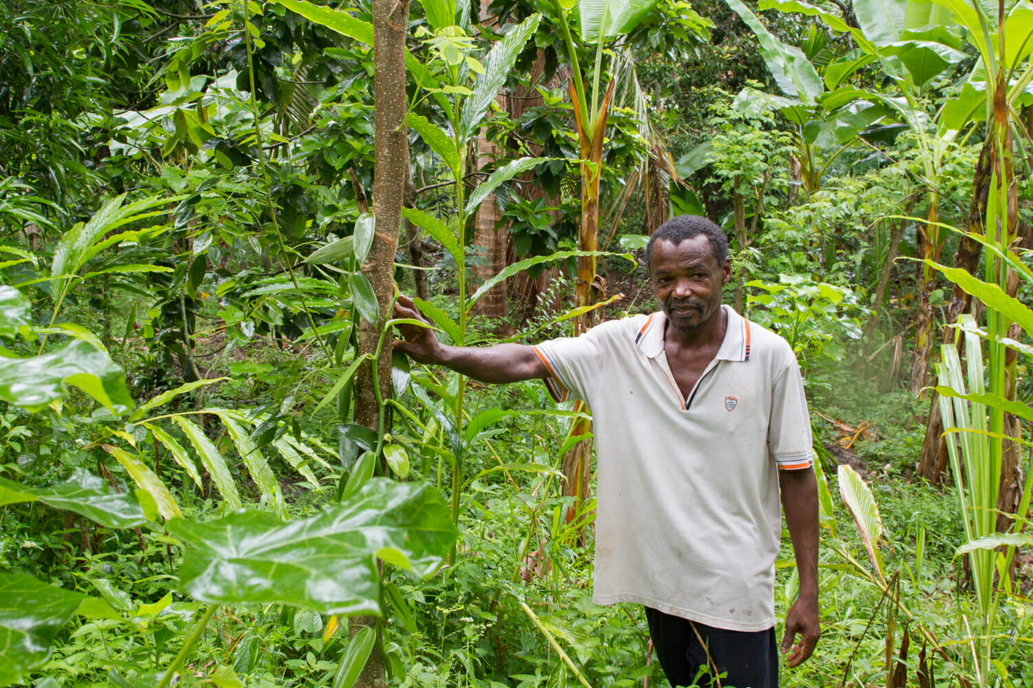 Hamad Mwatanii stands next to vanilla vines and trees in agroforest