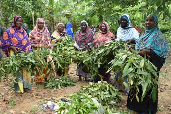 Eight women farmers stand holding bunches of vanilla seedling cuttings.