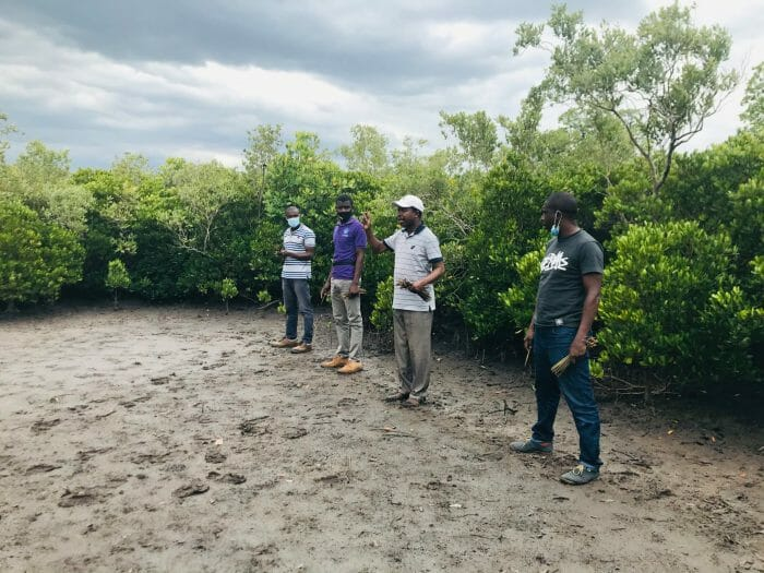 Planting mangroves on the coast of Mozambique